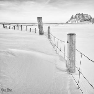 Sentinels in the snow.jpg