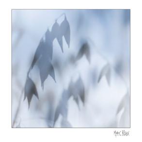 Intimate landscapes 2-02.jpg