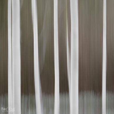 Paper Birches II.jpg