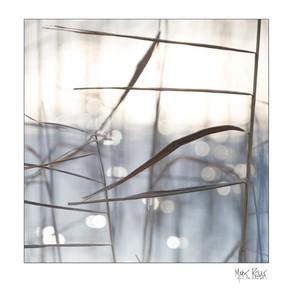 Intimate landscapes 2-09.jpg