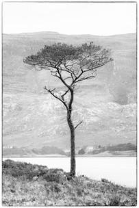 Lone tree, Upper Loch Torridon.jpg