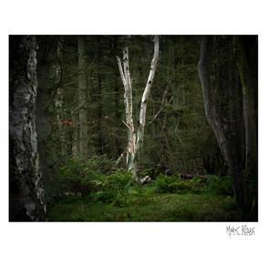 woodland 06.jpg