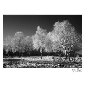 woodland 03.jpg