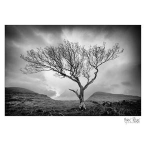 Mull tree.jpg