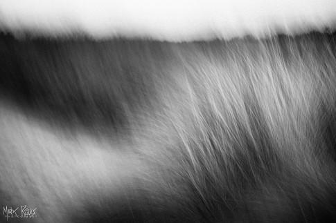 Marram grass.jpg