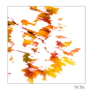 Impressionist 1x1-2.jpg