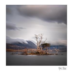 Assynt pines.jpg