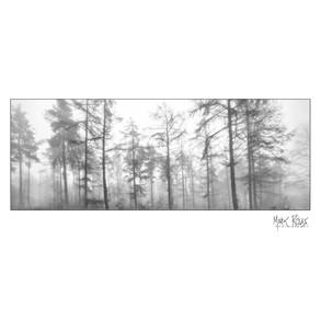 woodland 01.jpg