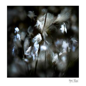 Intimate landscapes 2-07.jpg