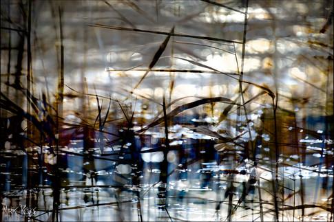 Reeds in the lochan.jpg