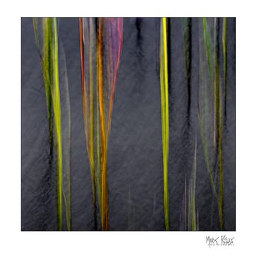 Cairngorms reeds 1x1.jpg