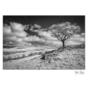 Lone tree in Yorkshire Dales.jpg