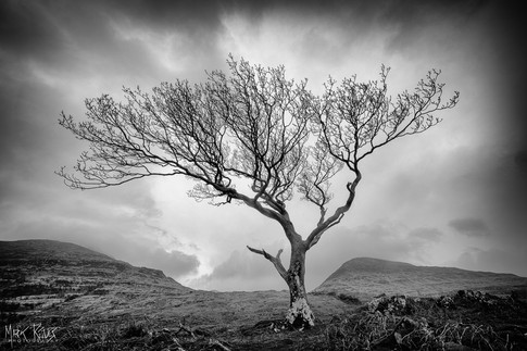 Lone tree, Isle of Mull.jpg