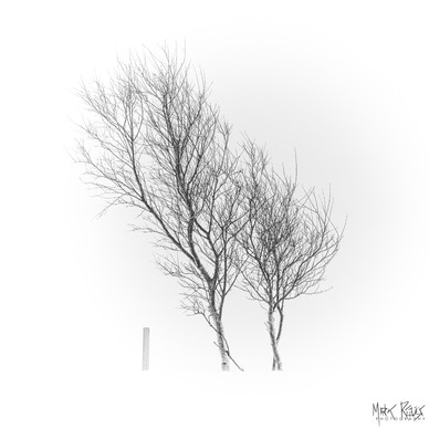 Two trees and a fence post.jpg