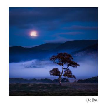 tree at sunrise 1x1.jpg