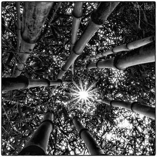 Bamboo plantation.jpg