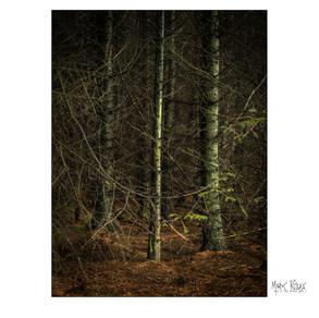 woodland 09.jpg