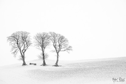 Three beeches.jpg