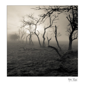 hawthorns 2.jpg
