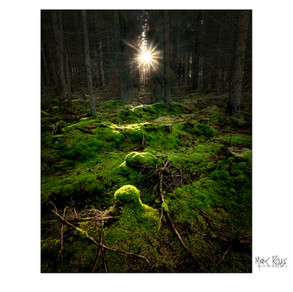 woodland 08.jpg