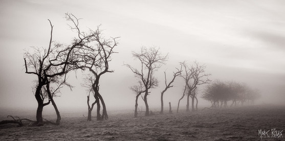 Hawthorns.jpg