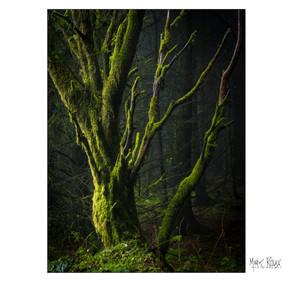 woodland 10.jpg