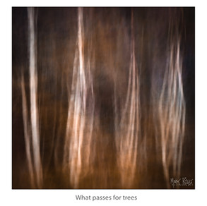 What passes for trees.jpg