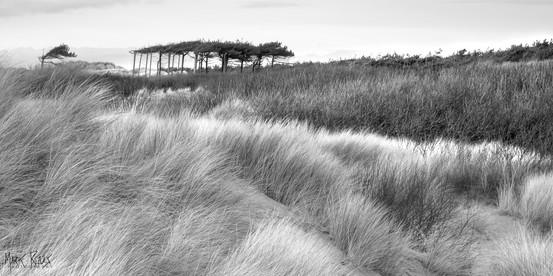 Windy day on the coast.jpg