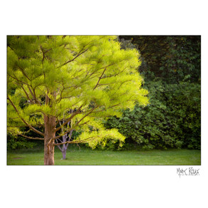 green trees.jpg