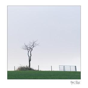Carnock field.jpg