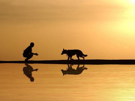 העברת בעלות לכלב