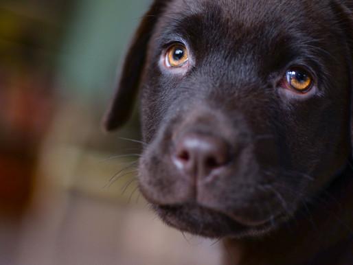 מה לעשות כדי להעסיק את הכלב כשהוא נשאר לבד בבית?