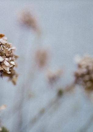 Faded%20flowers%20still%20life_edited.jp