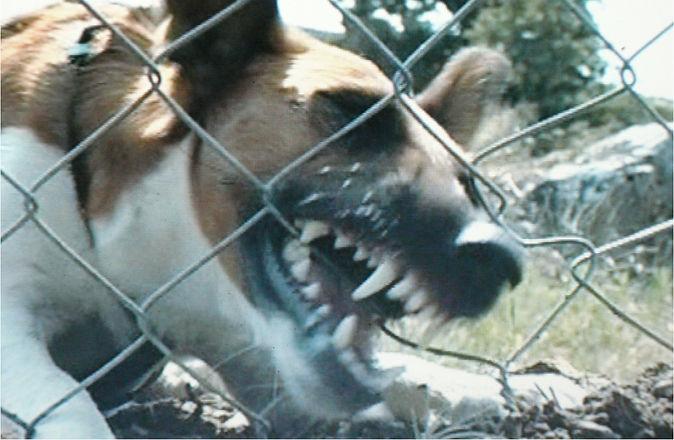 chien flip gueule.jpg