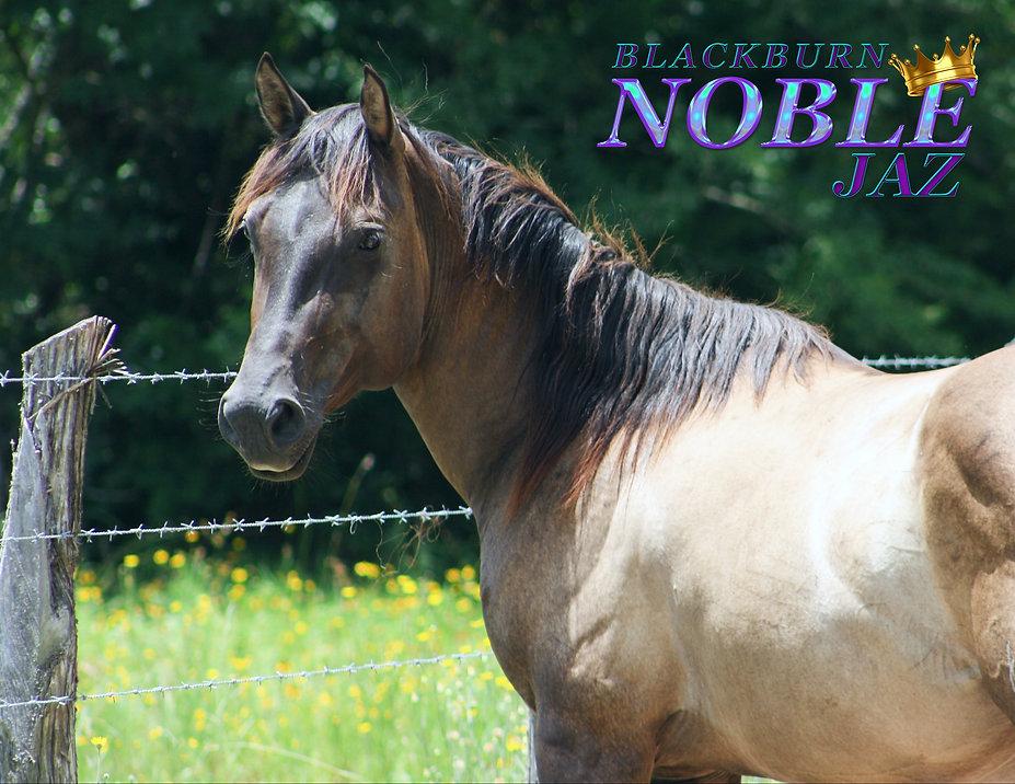 Noble-31.jpg