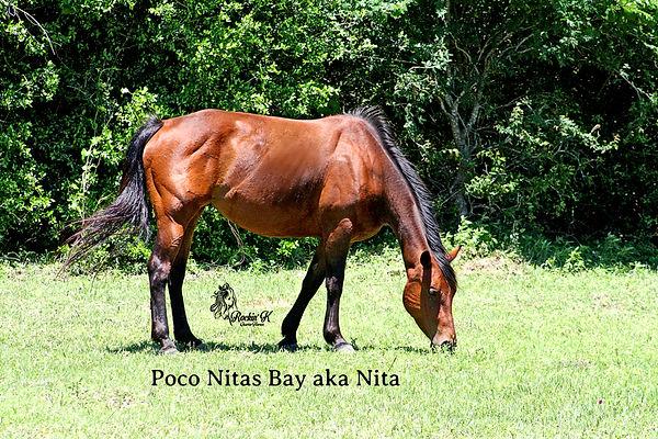 Nita-3.jpg
