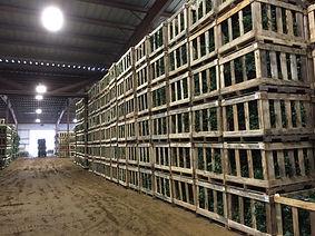 Greenery Crates.JPG