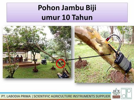 Monitoring Perbedaan Sapflow Pada Pohon Jambu Biji (Psidium Guajava) Usia 1 & 10 tahun