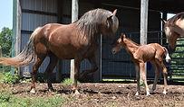 emmy...this mare.jpg