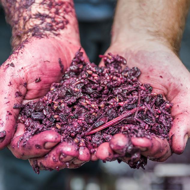 Shottesbrooke Winemaking McLaren Vale
