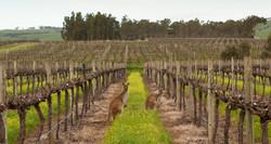 Shottesbrooke Vineyards (15) - Shay Bayly Photography 2013