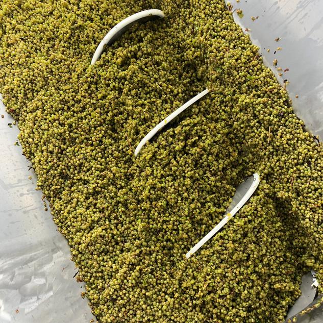 Shottesbrooke Chardonnay Crusher