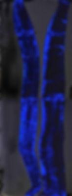 """Fine Art Gallery Saint Tropez Gianni Fasciani - """"Entre les lignes"""" 60 x 160 cm"""