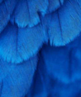 Partagez des ateliers avec votre Agence Rédactionnelle, Les Plumes de Gaia - plumesdegaia.com