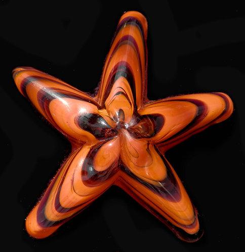 """Small Starfish 1""""-1.5"""""""
