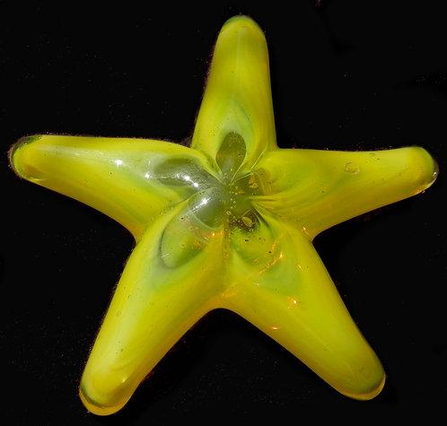 """Medium Starfish 1.5-2"""""""