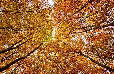 Germany   Landscape Photography