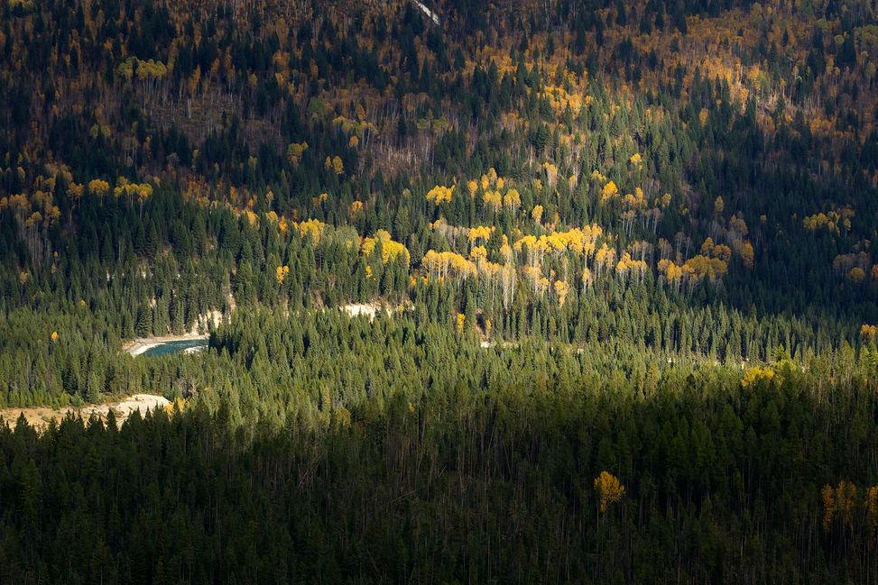 River in the Sun, BC, Canada
