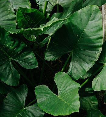 green-plant-2125600.jpg