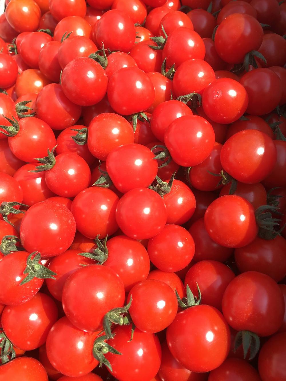 収獲されたミニトマト